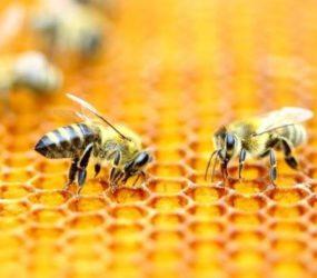 Francia es el primer país en prohibir los cinco plaguicidas vinculados a la muerte de las abejas