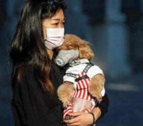 Perrito contrae Coronavirus y ahora los perros en Hong Kong están en cuarentena.