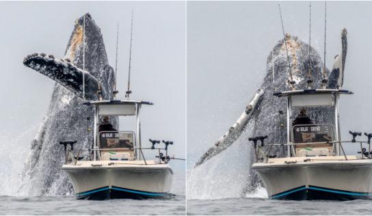 Vídeo viral muestra el increíble salto de una ballena gigante al lado de un pescador