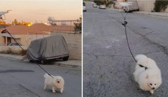 Debido a la cuarentena un hombre pasea a su perrito con un dron por las calles