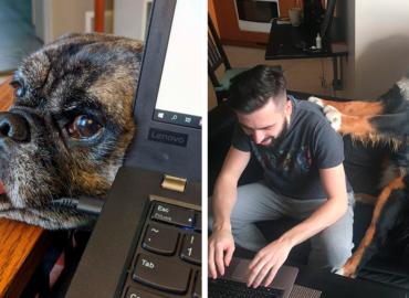 25 imágenes que muestran como es trabajar desde casa con mascotas
