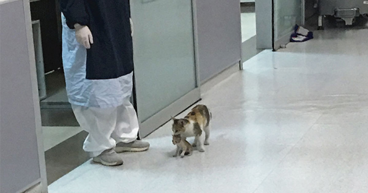 Gatita lleva a su bebé enfermo al hospital y espera a ser atendida