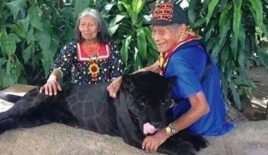 Ancianos maya criaron a un jaguar negro desde que era cachorro y es bellísimo
