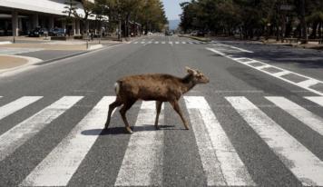 Las mejores fotos de animales caminando felices en las calles sin humanos
