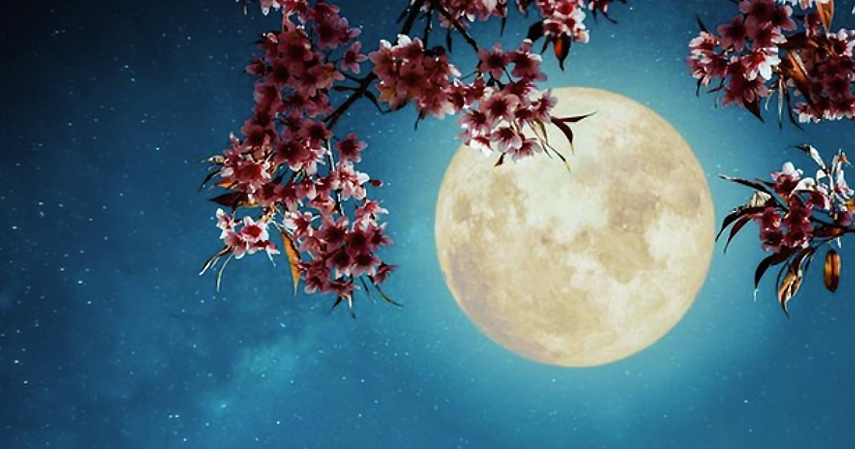 """La última superluna del año se verá hoy. No te pierdas de la """"Luna de Flores"""""""