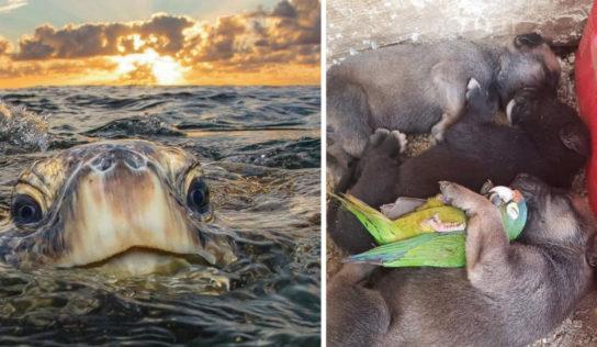 15+ Fotos de animalitos pasándola muy bien sin humanos