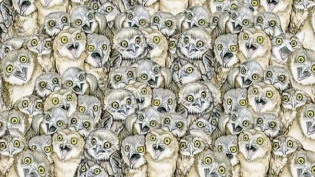 Reto Viral: ¿Puedes encontrar el gato escondido entre los búhos?