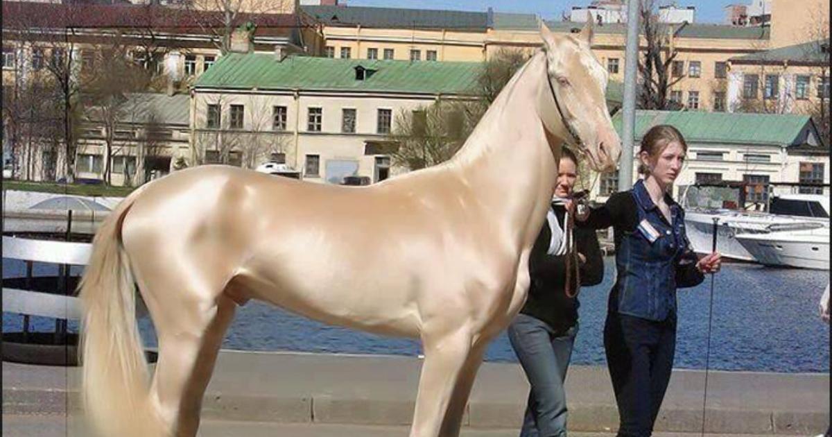 Este caballo es el más bello del mundo y su pelaje brilla como si fuera de oro