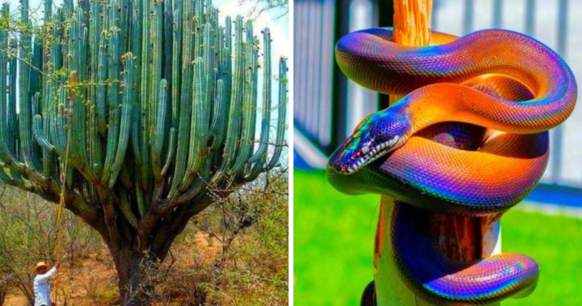 18 imágenes que muestran la naturaleza como nunca la habías imaginado
