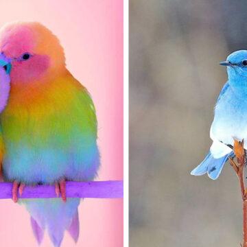 30 Aves tan hermosas que parecen salidas de un concurso de belleza de la naturaleza