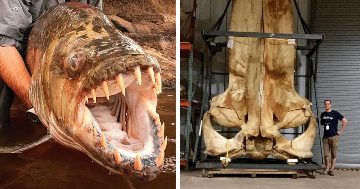 18 animales gigantes que rara vez son vistos por humanos