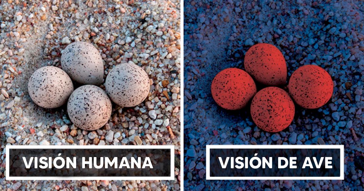 Científicos muestran la gran diferencia en que las aves ven al mundo comparado con los humanos