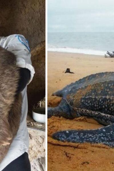 16 animales que son tan grandes que no parecen reales.
