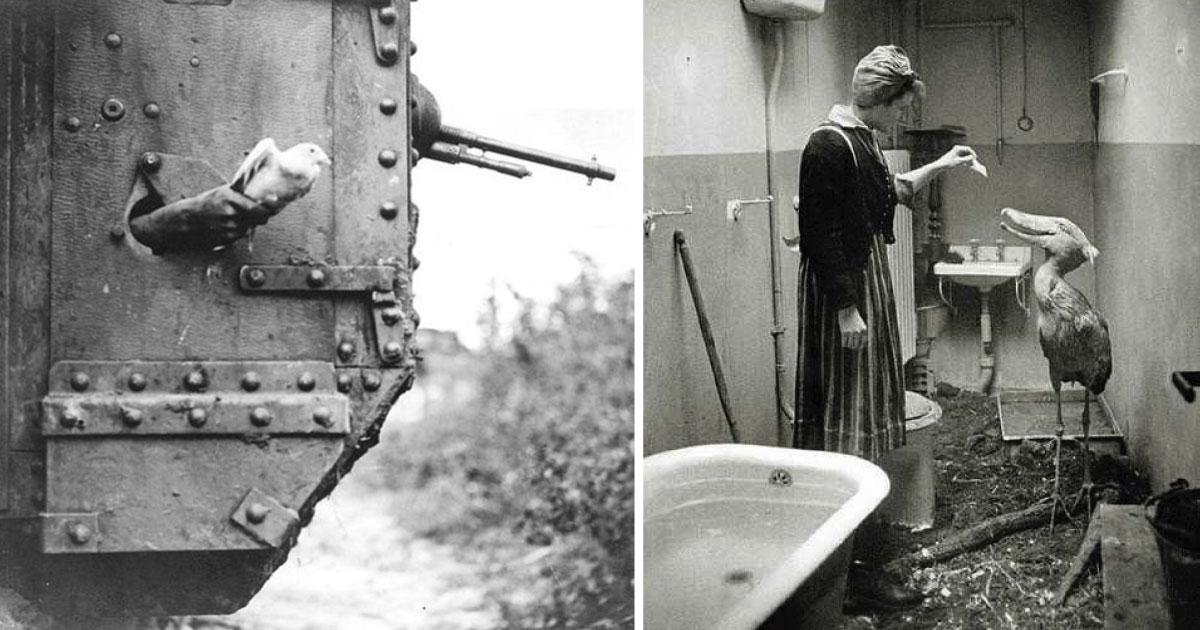 20 fotografías de la antigüedad que muy pocas personas han visto