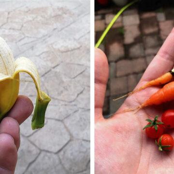 20 veces que los jardineros nos enamoraron con sus cultivos en miniatura