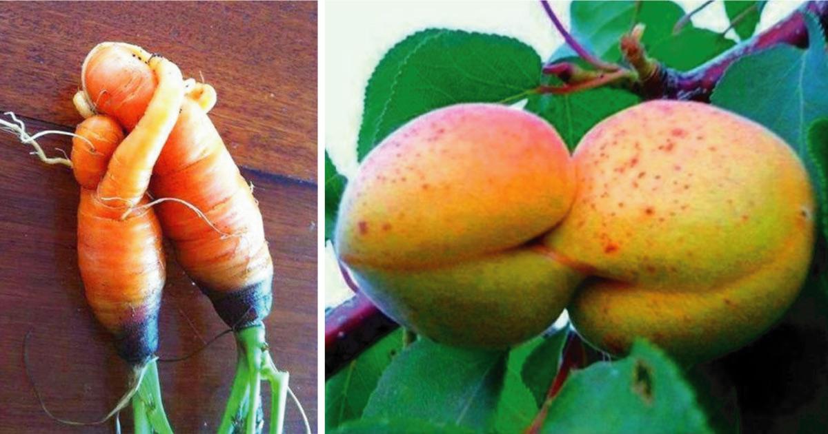 23 Frutas y verduras que parecen haber cobrado vida por la forma que crecieron