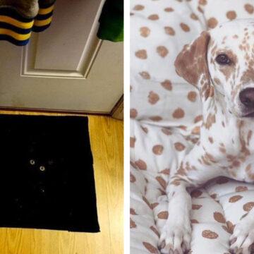18 Mascotas con maestría en camuflaje que son difíciles de encontrar