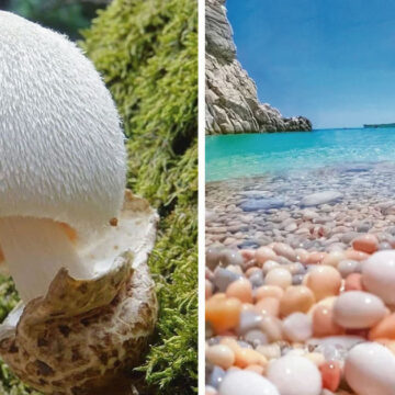 20 Imágenes que demuestra el lado más sorprendente de la naturaleza