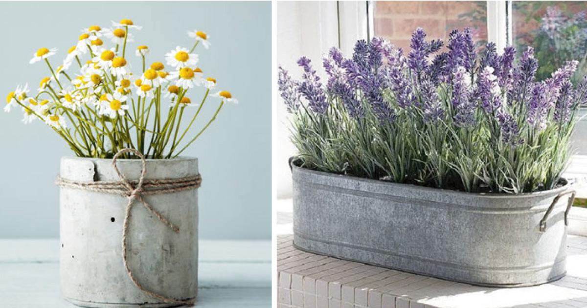 10 plantas para atraer prosperidad y abundancia a tu vida.