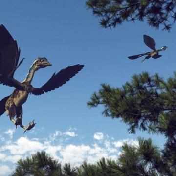 Un estudio confirma que la primera pluma fósil descubierta perteneció al dinosaurio Archaeopteryx