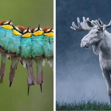 20 Animales con los que la naturaleza se esforzó en sorprendernos