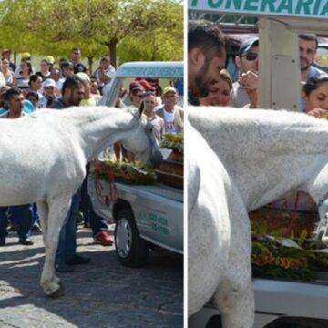 Sereno, el caballo que demuestra su lealtad y se entristece en el funeral de su dueño