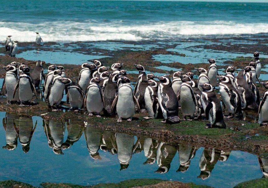 Pingüino completamente blanco es visto por primera vez en las Islas Galápagos