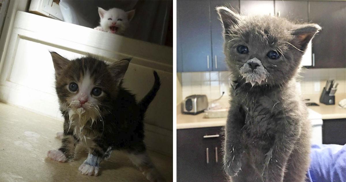 17 Fotos de gatitos comiendo que solo los dueños de un felino entenderán