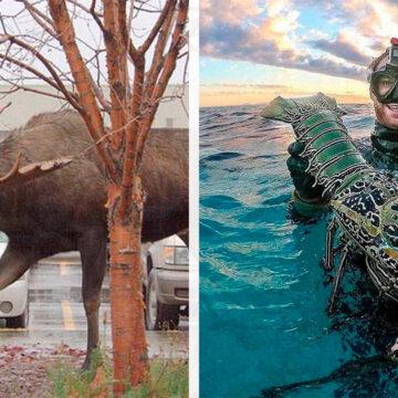 15 Fotos que muestran el verdadero tamaño de las cosas. La gallina es enorme