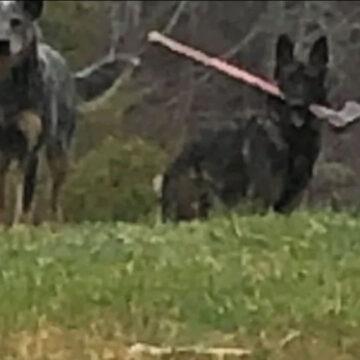 Iba entregar el correo y se encontró un perro con un hacha