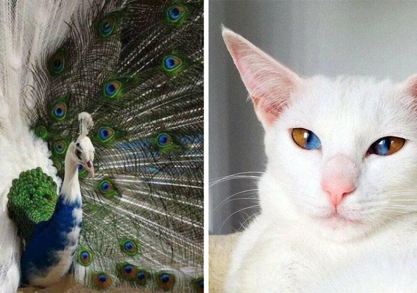 18 Animales únicos con hermosos colores hechos por la naturaleza