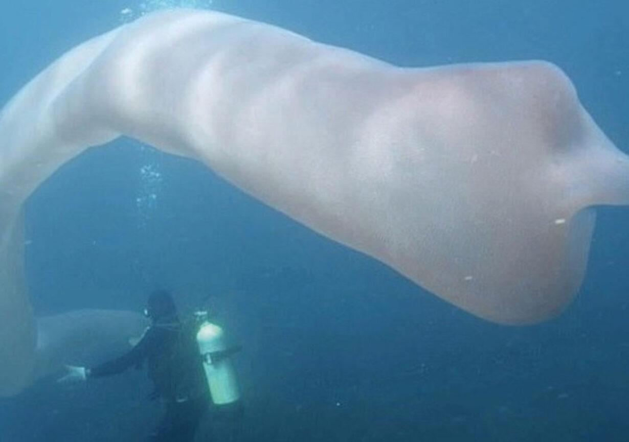 Gigantesca criatura marina sorprende a científicos del mundo