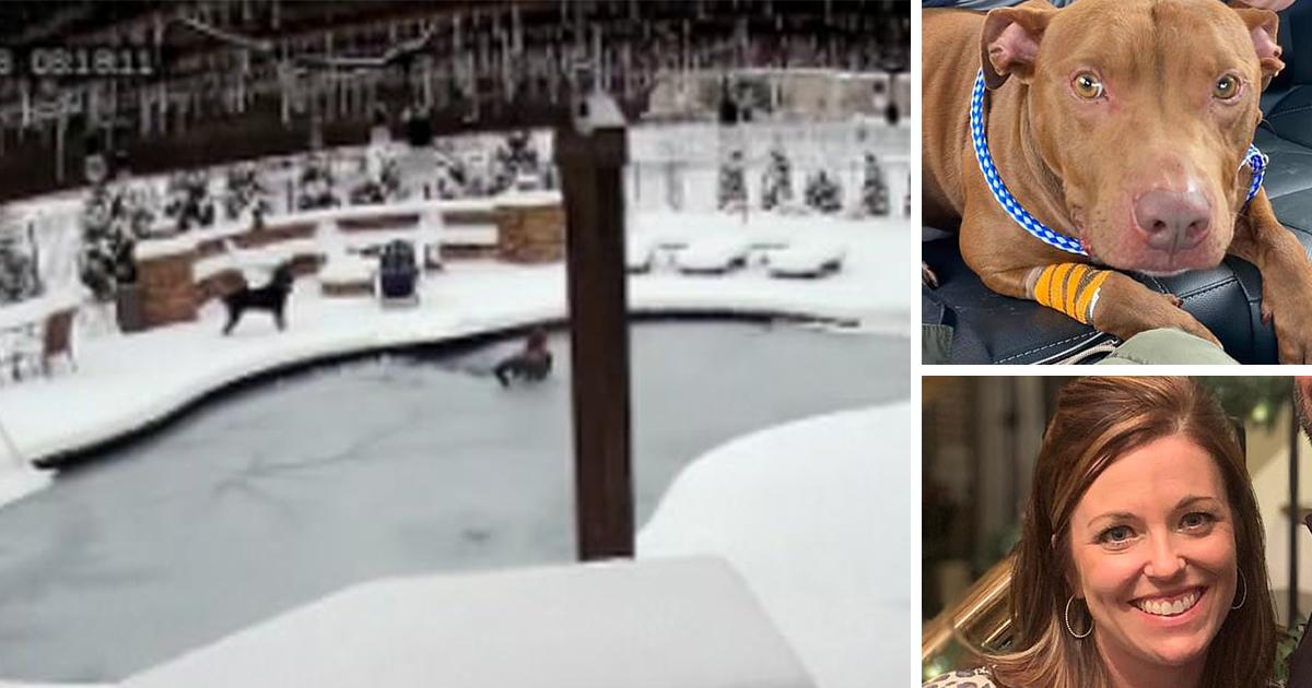 Una mujer salta a una piscina CONGELADA para salvar a su perro atrapado (VIDEO)