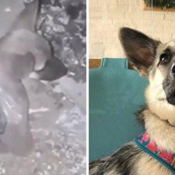 18 Animales antes y después de ser rescatados. Su mirada lo dice todo