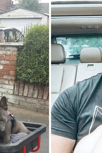 """20 Padres que también dijeron """"No quiero mascotas"""" y ahora no pueden vivir sin ellas"""