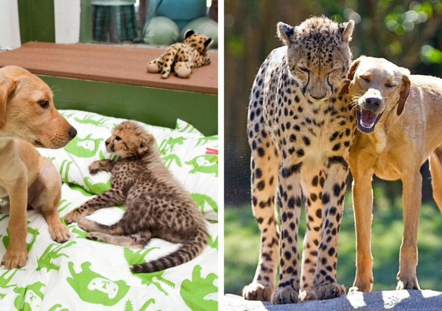 15 Animales que mantuvieron su amistad a pesar de sus diferencias