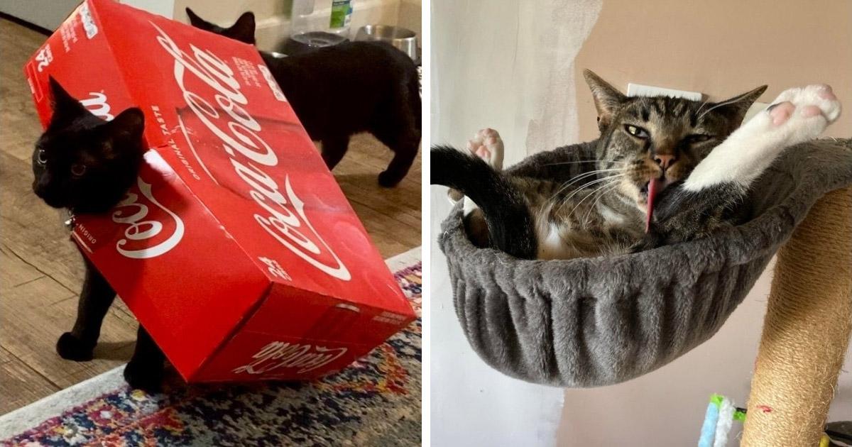 16 Veces en que los gatos fueron captados en momentos raros y divertidos