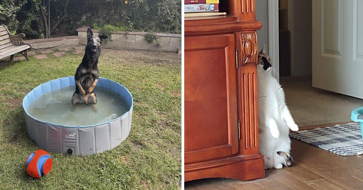 22 Fotos divertidas que demuestran que toda familia necesita una mascota