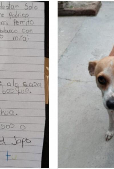 Luego de perder a su perrito ofreció una jugosa recompensa para quien lo regresara a casa