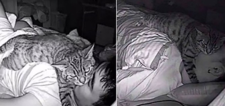 Mi gato me Asfixia Mientras Duermo